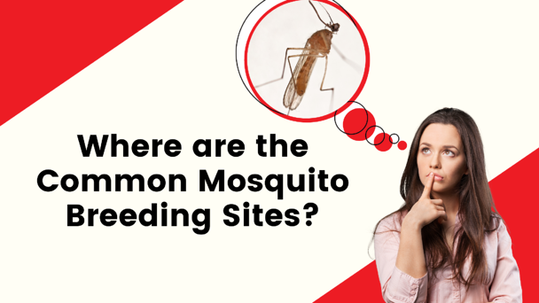 Where are the Common Mosquito Breeding Sites?