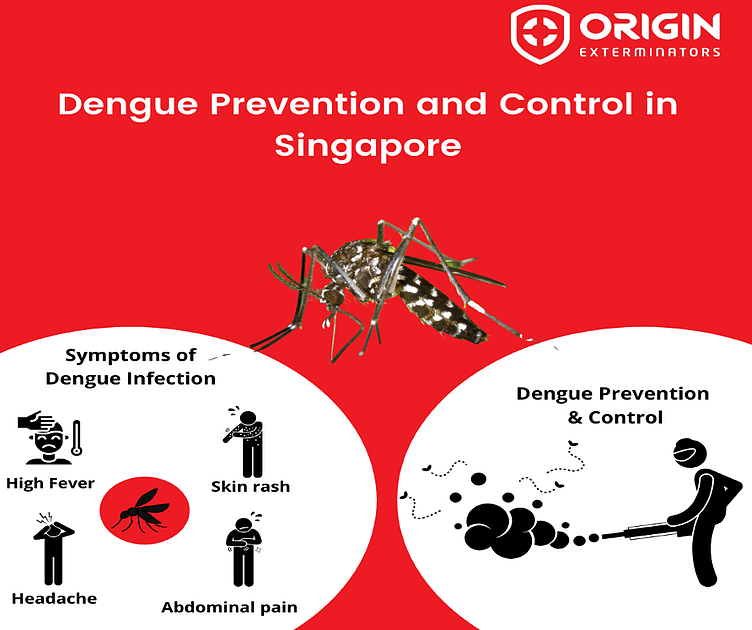 Ways to Prevent Dengue from Spreading