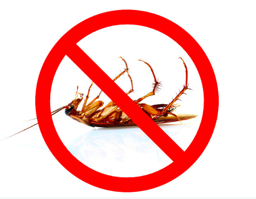 no more cockroaches
