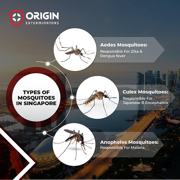 What are the types of Mosquito Species?