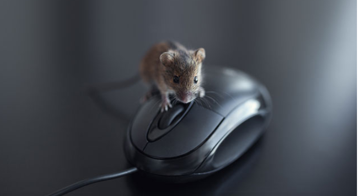 How To Prevent Rodents From Entering Your Office?