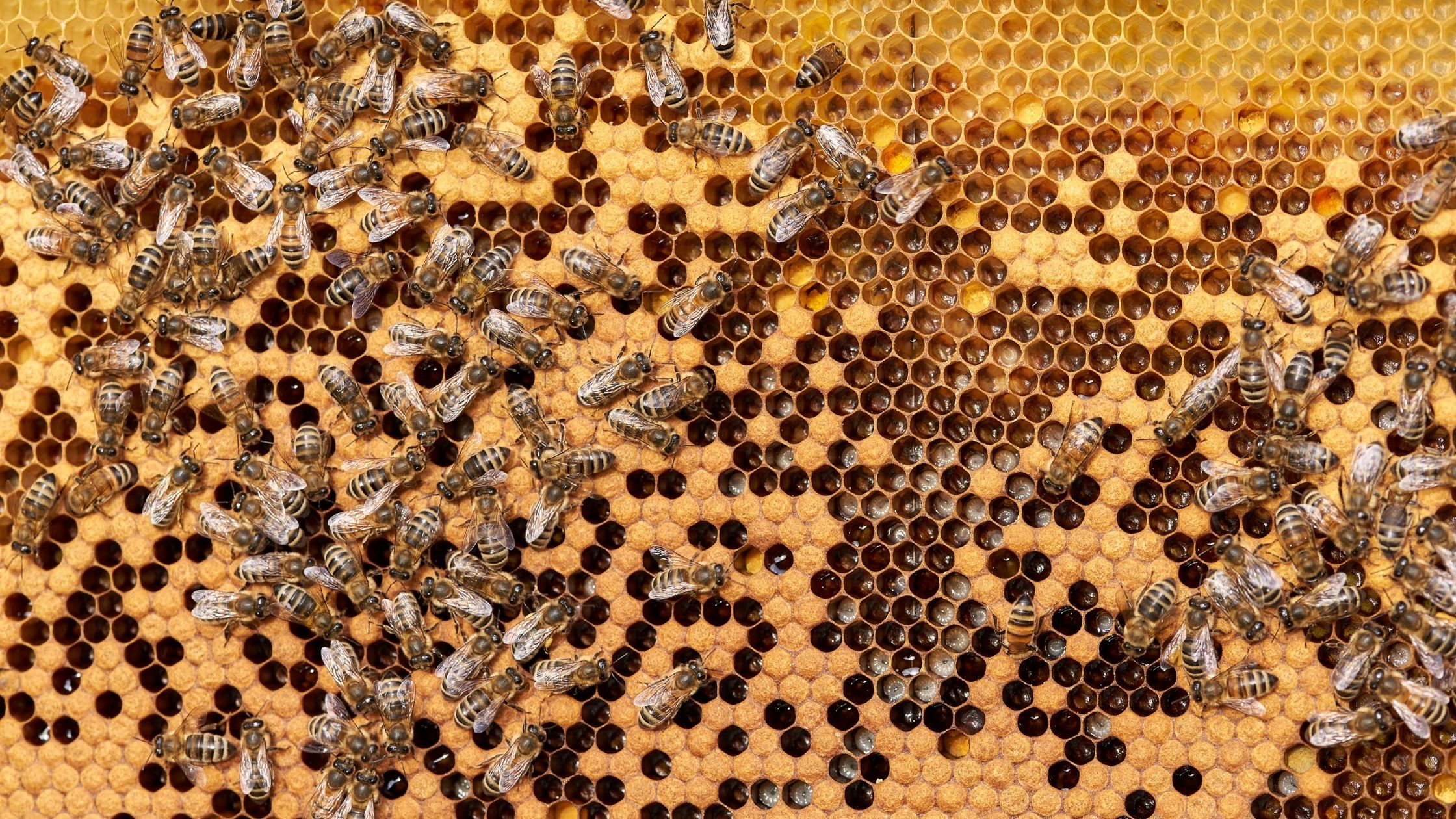 5 Little-Known Facts about Bees in Singapore