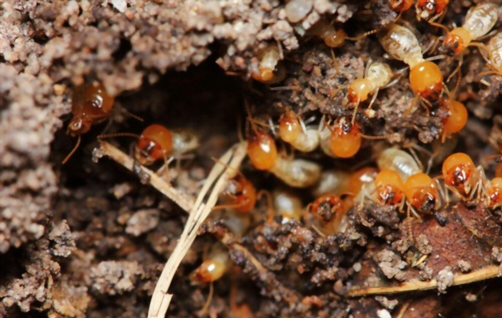 5 Easy-To-Spot Signs Your Home Might Have Termites