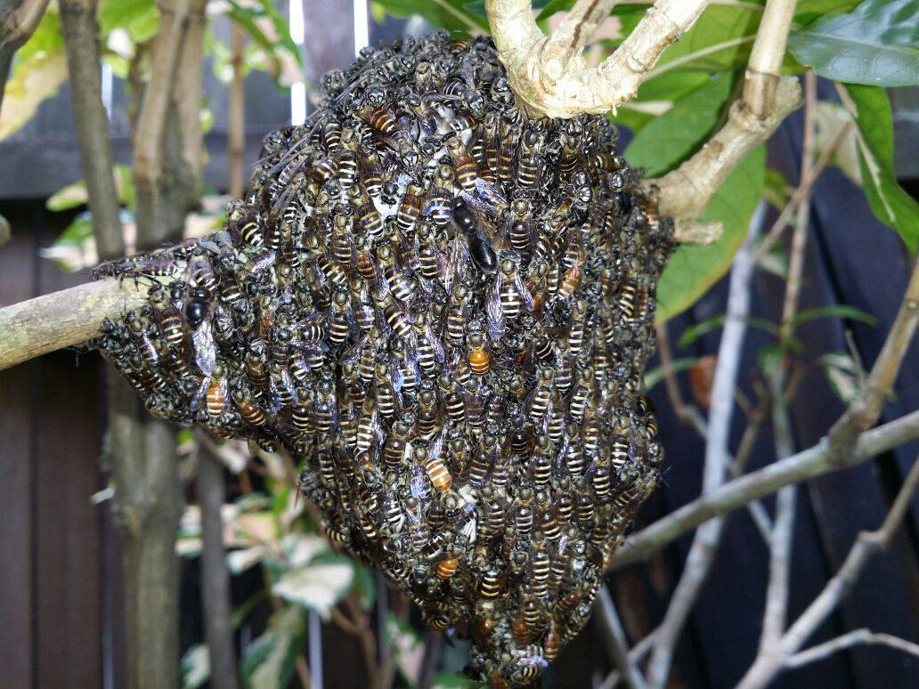 Everything You Need To Know About Bee Relocation