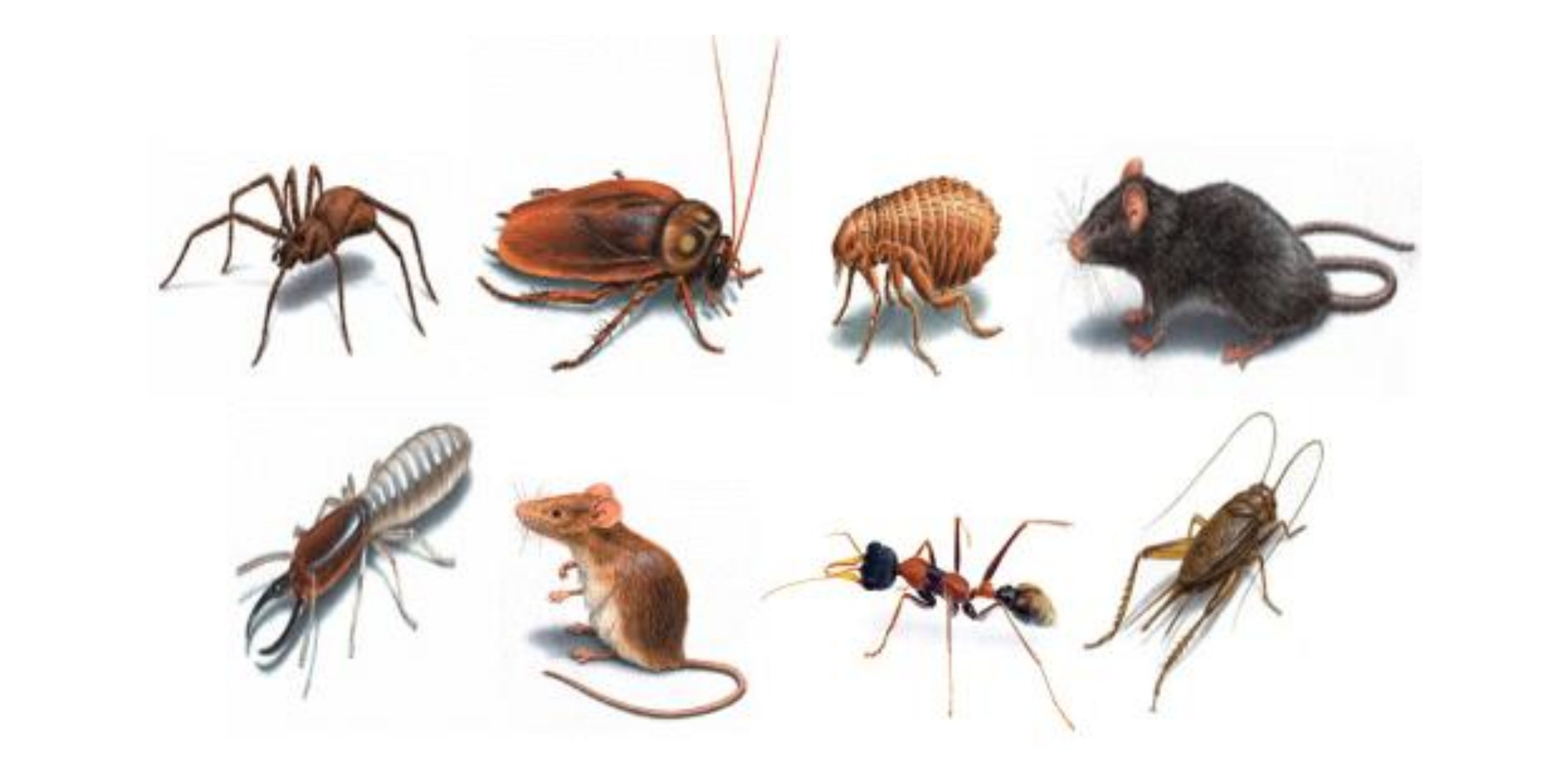 How to Control Household Pests in Singapore?