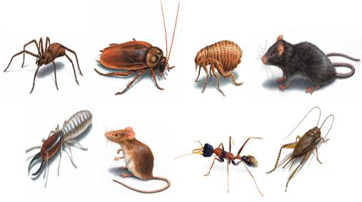 How to Choose the Best Pest Management Services