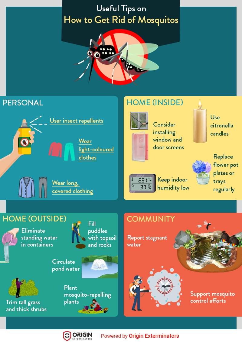 Useful Tips on How to Get Rid of Mosquitos