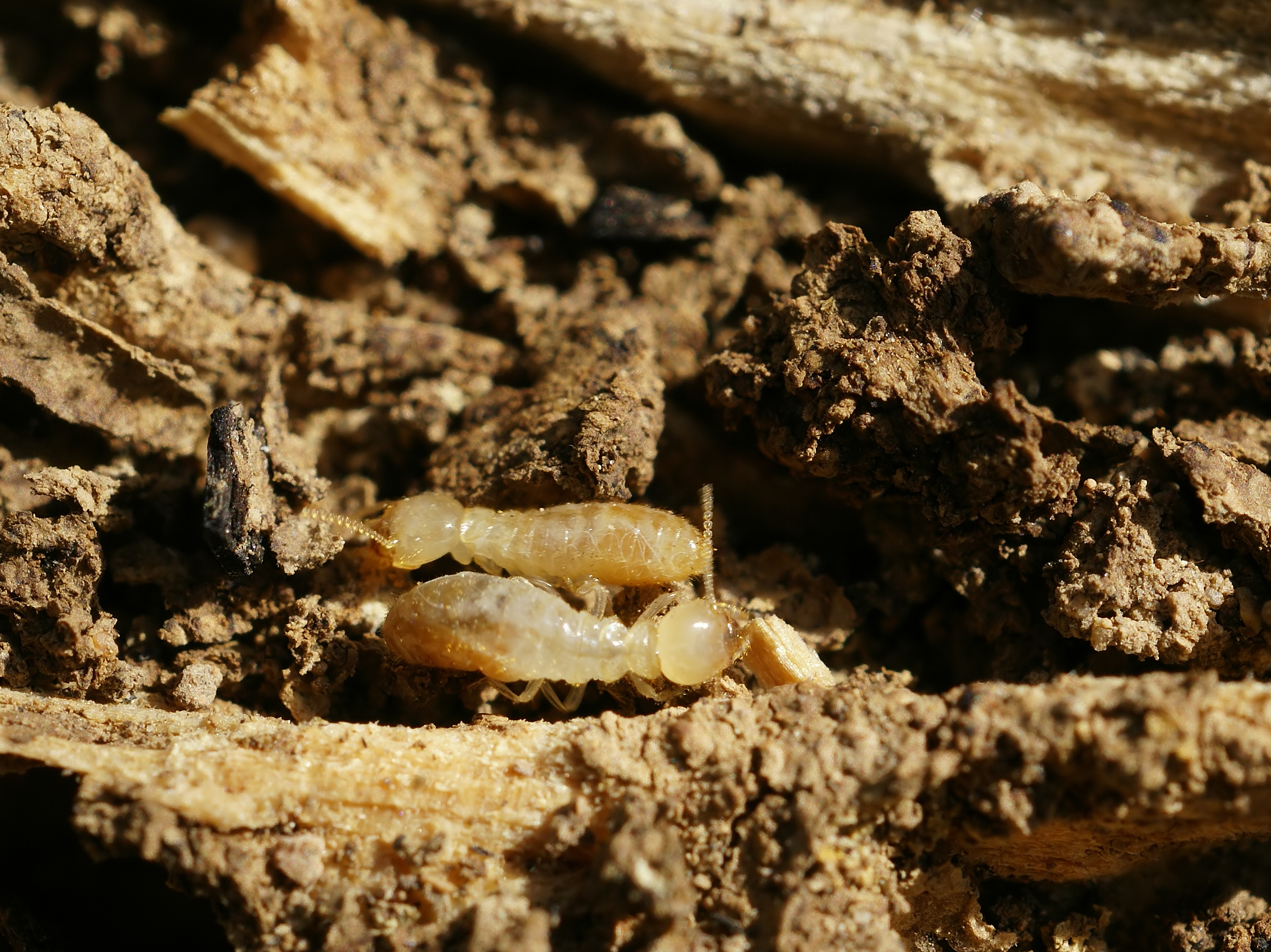 Four Effective Termite Control Methods to Protect Your Property and Furniture