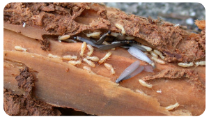 Terminate Termites Before They Take Over
