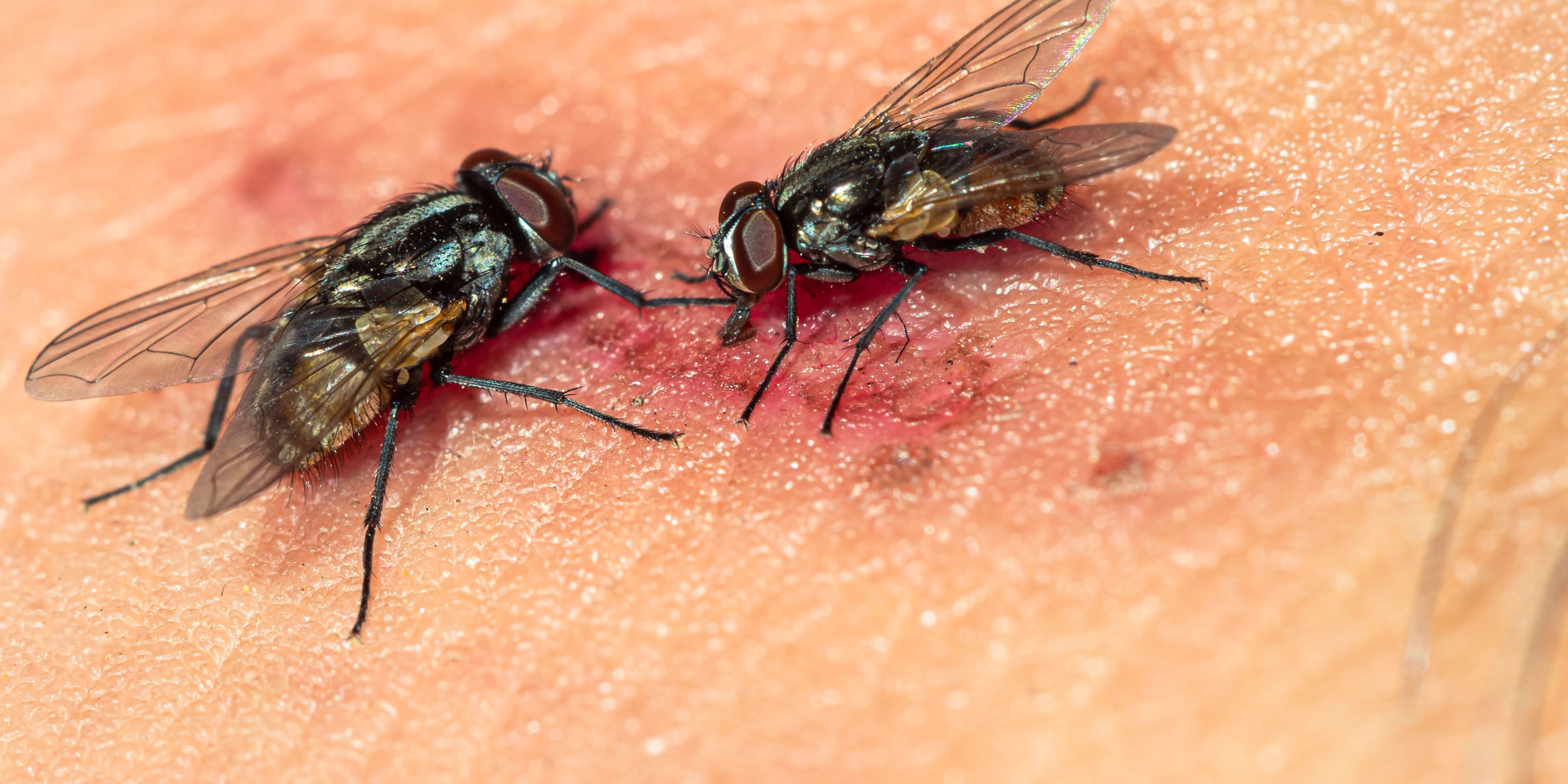 The Ultimate Guide To Flies Control In Singapore