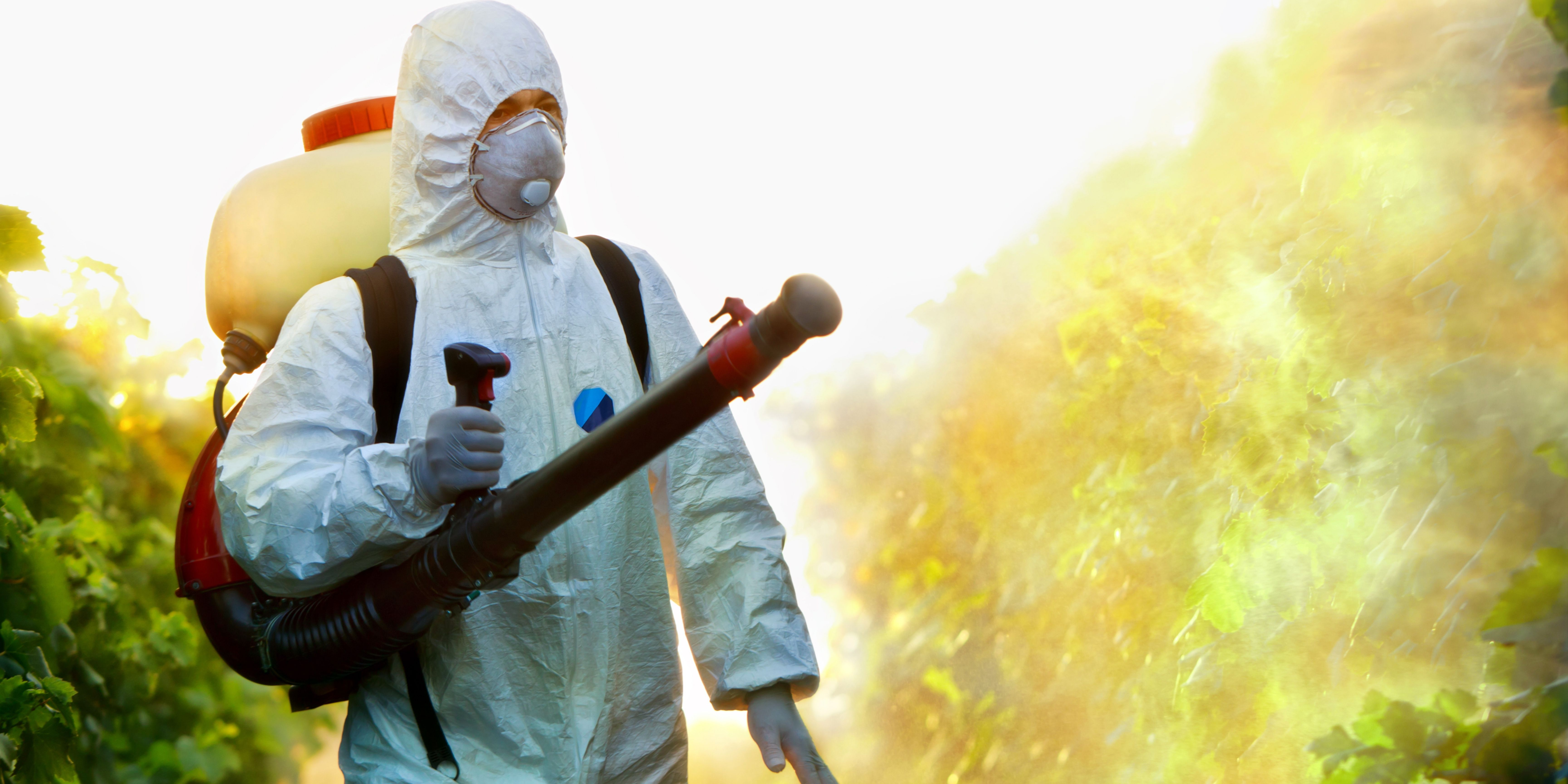 Tips For Choosing The Right Pest Control Company In Singapore