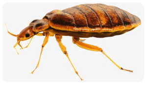 How to Prevent the Bed Bugs from Invading Your Luggage on a Holiday?