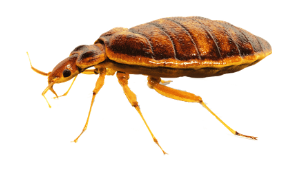 Expert Tips to Prevent Bed Bug Infestation at Your Residence