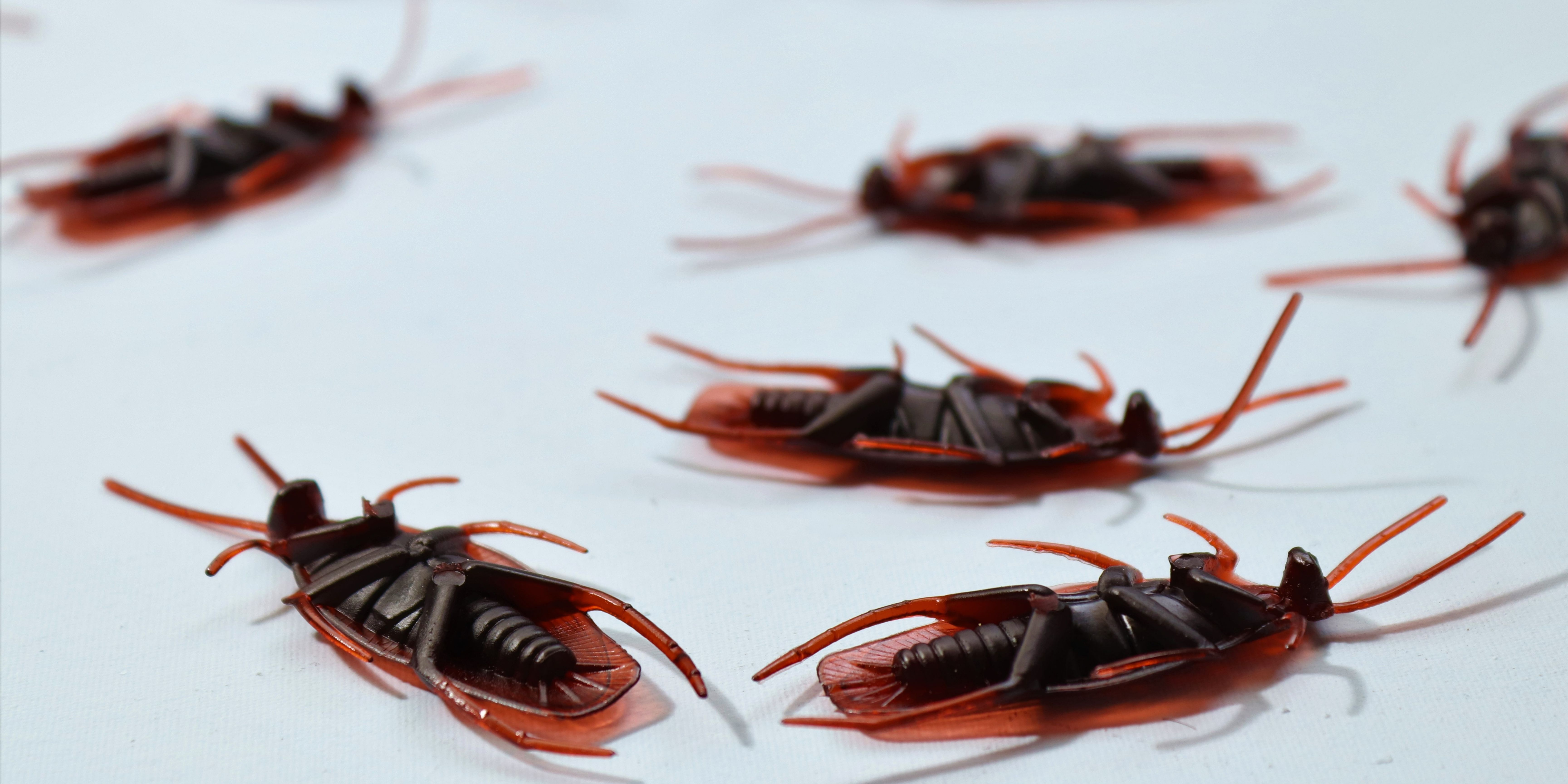 Eliminate Cockroaches Permanently: Best Tips and Tricks