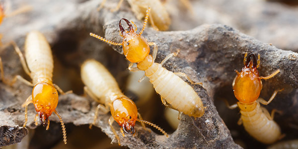 Top Five Termite Hot spots and Tips to Prevent the Infestation