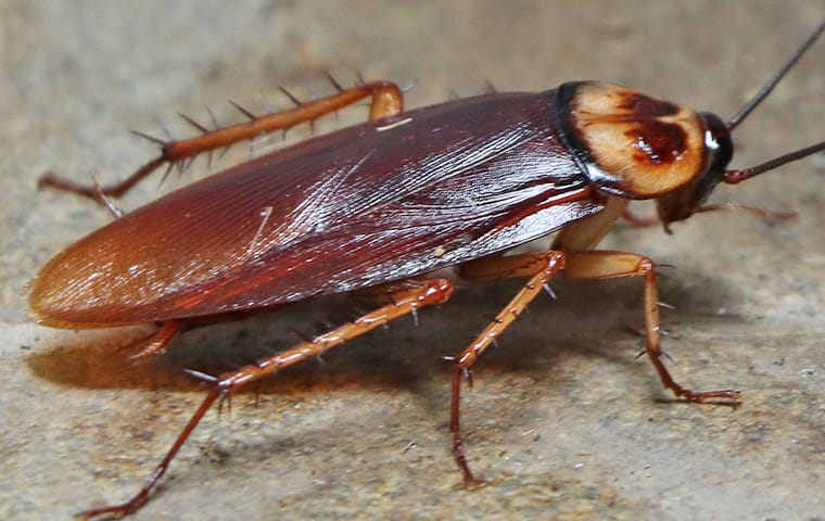 4 Helpful Tips to Prevent a Cockroach Infestation at Home